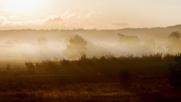 Rising Sun by MileJanjic