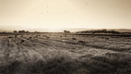 Grasslands of Serbia