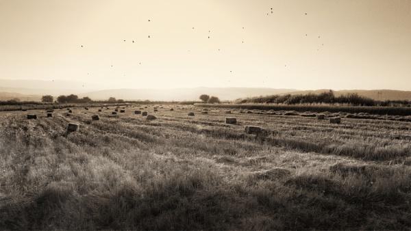 Grasslands of Serbia by MileJanjic
