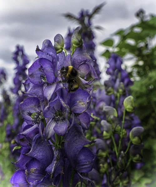 Busy bee by BillRookery