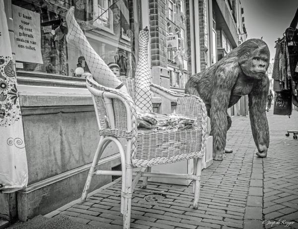 Street Monkey by joop_
