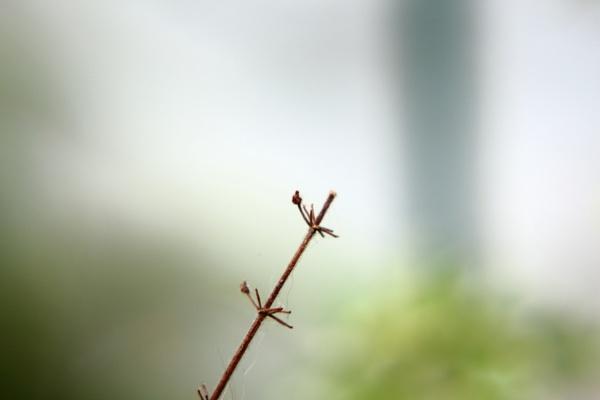 Tiny branch  by DiegoCueto75