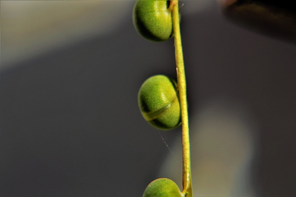 Green Seed II by DiegoCueto75