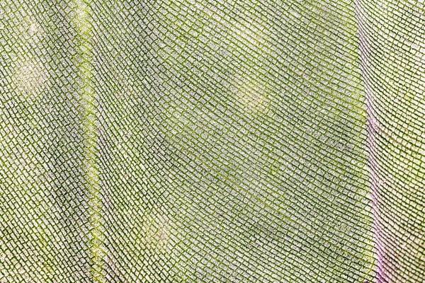 Strelitzia leaf detail by DianneKG