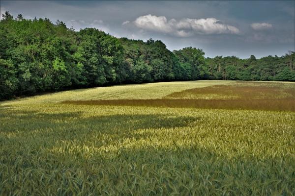 Forest Golden Fields by PentaxBro