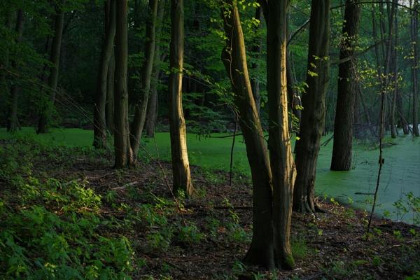 Sunken Forest by PentaxBro