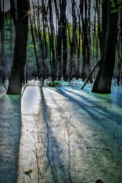 Lighted Forest by PentaxBro