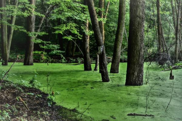 Muddy Forest by PentaxBro