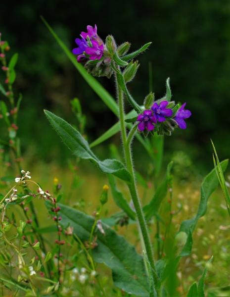 Wild Flowers  by PentaxBro