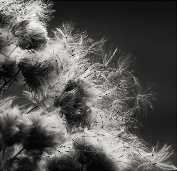 Windblown by MalcolmM