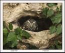 Peek-a-Boo.! by Maiwand