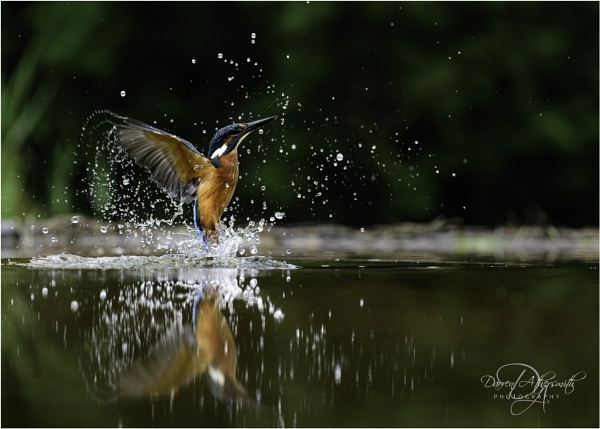 Kingfisher by dathersmith