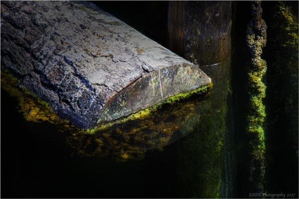 Water Logged by Daisymaye