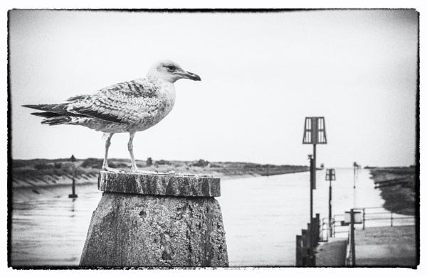 At Rye Harbour by dawnstorr
