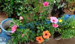 """ Plants & Flowers """