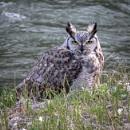 Wildlife... by Jasper87