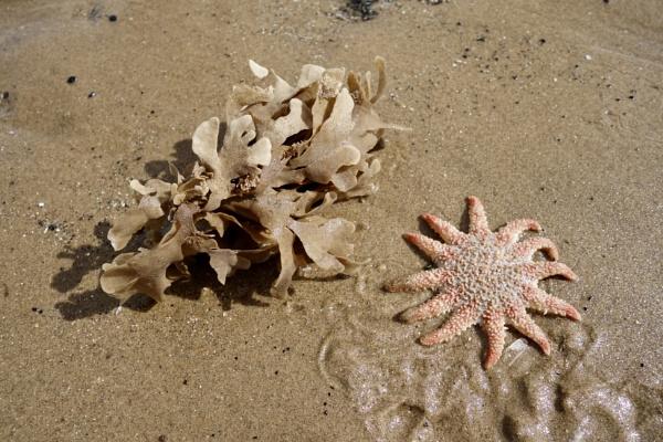 Marine life (deceased) by raywalker
