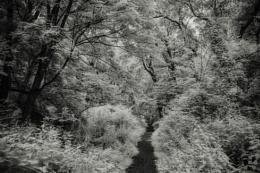 Undergrowth
