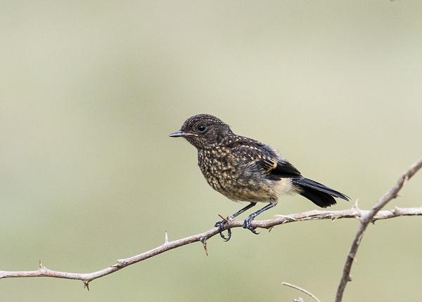 Bird by swami1969