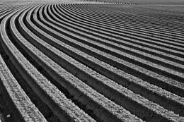farmer's abstract art