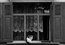 Cat. by vikma19