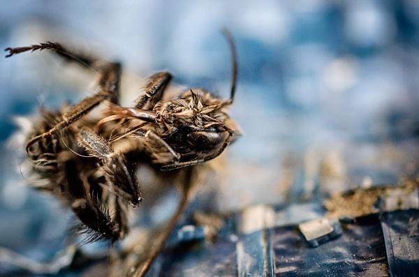 dead bee by rocky41