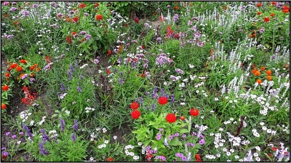 summer flowers\' meadow 3 by FabioKeiner