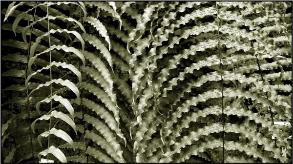 fernleaf patterns by FabioKeiner