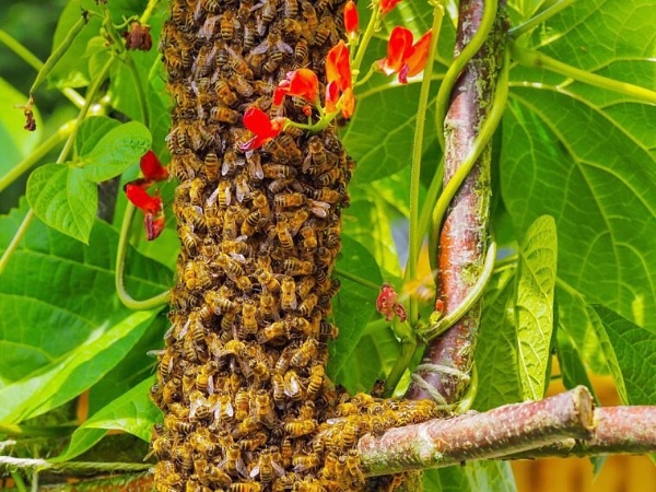 Bee Swarm by victorburnside