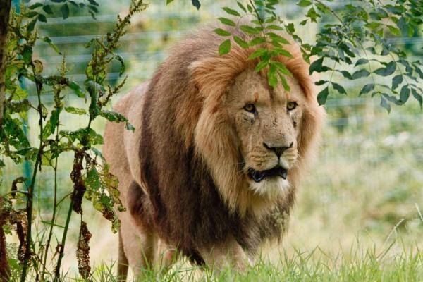 King of Longleat by Lencollard