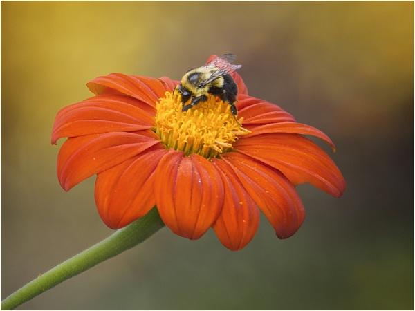 Busy Bee by Leedslass1