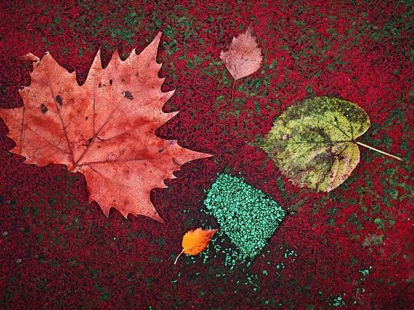 Fall diversity by LaoCe