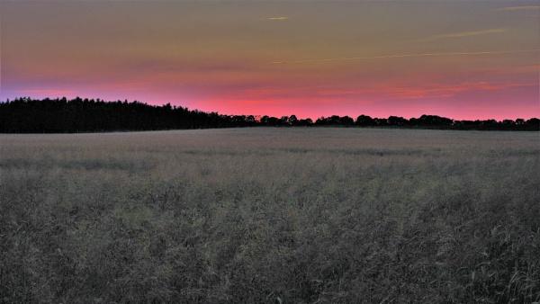 FOREST - SUNSET FIELDS by PentaxBro