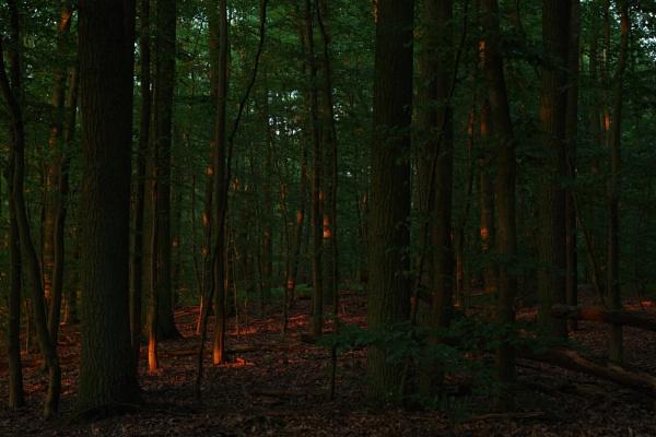FOREST GLOW by PentaxBro