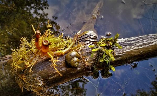 Aquatic Life by PentaxBro