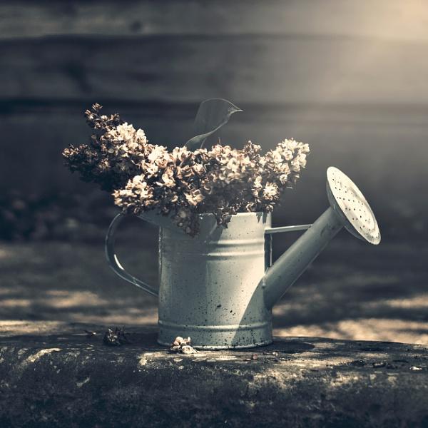 ...still life by KristinaZvinakeviciute
