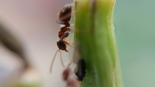 Ant time by Wackypics