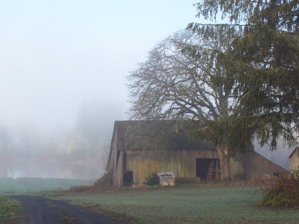 misty morn by rainman19154