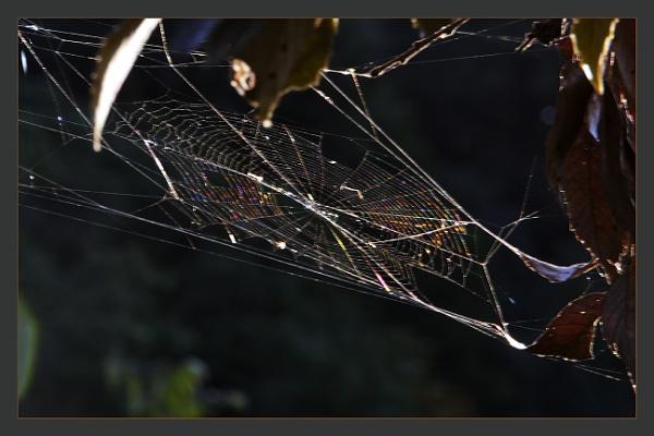 Glittering Web by prabhusinha