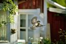 summerhousetime by maratsuikka