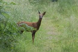 Oh Deer.....I've been spotted!