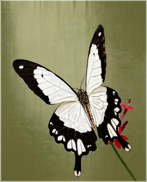 Flutter Bye by sweetpea62