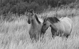Konic Ponies
