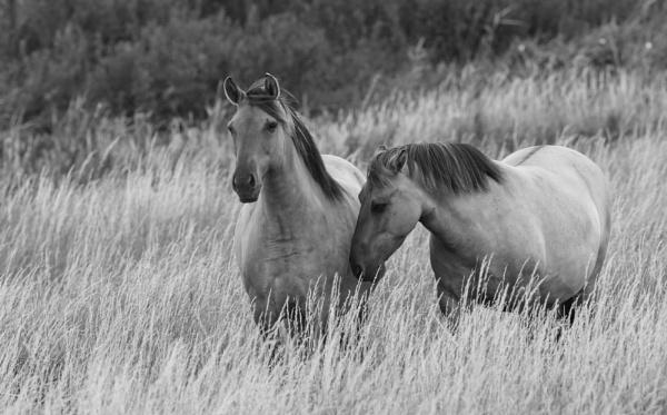 Konic Ponies by ali63