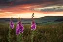 Moorland Delight by Trevhas
