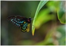 Butterfly by ColleenA