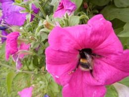 ummm nectar