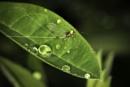 Medium Olive Mayfly by TrotterFechan