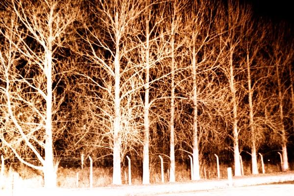 TREE SCARE by SOUL7