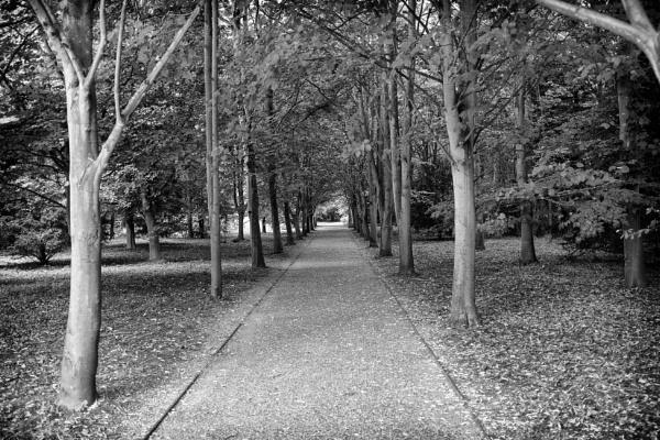 The Avenue by NevJB